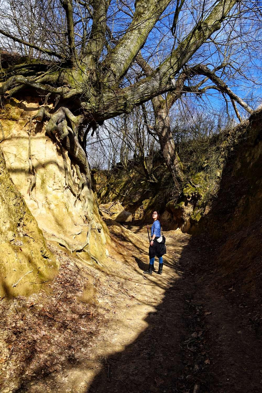 Kazimierz Dolny gorges walk around kazimierz dolny wawoz korzeniowy roots gorge