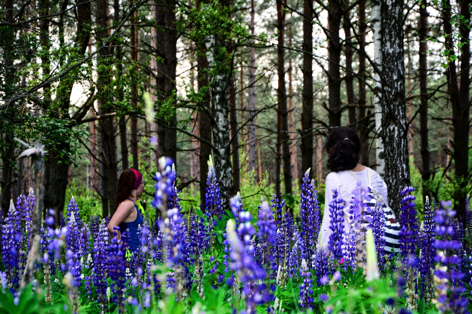 podlasie lupin girls in the field of flowers eastern poland blue flowers