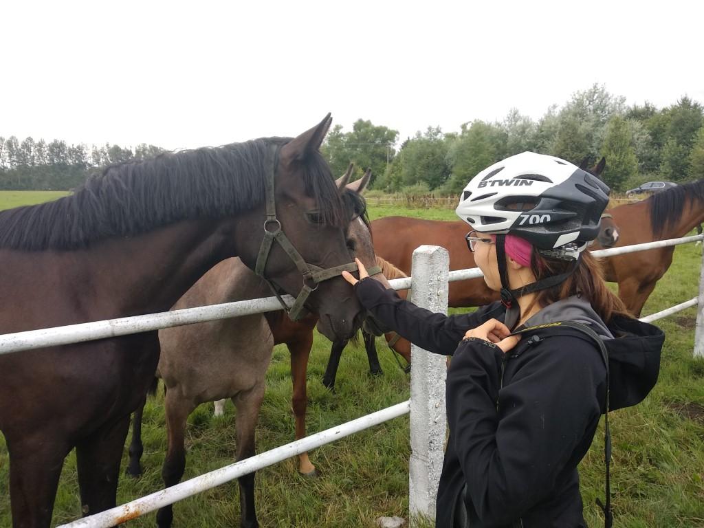 janow podlaski horses in poland
