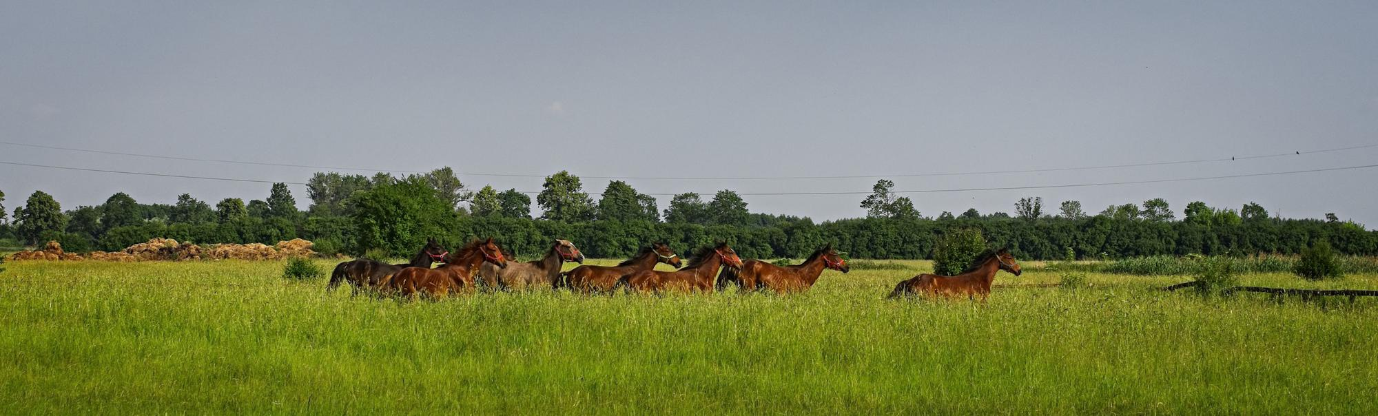 Places to Visit in Poland If You Are a Horse Lover