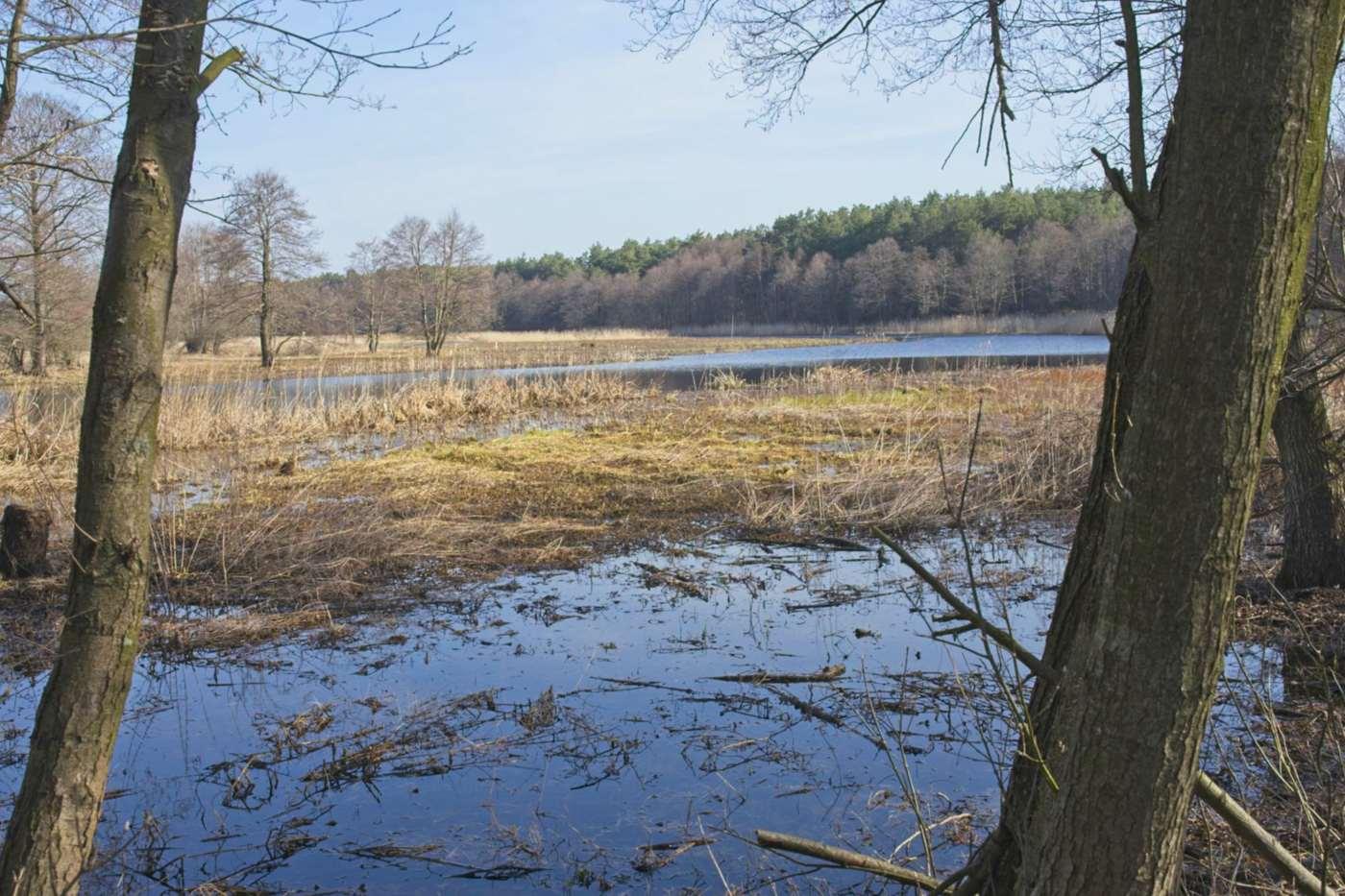 czapliniec near pultusk reserve in puszcza biala white forest