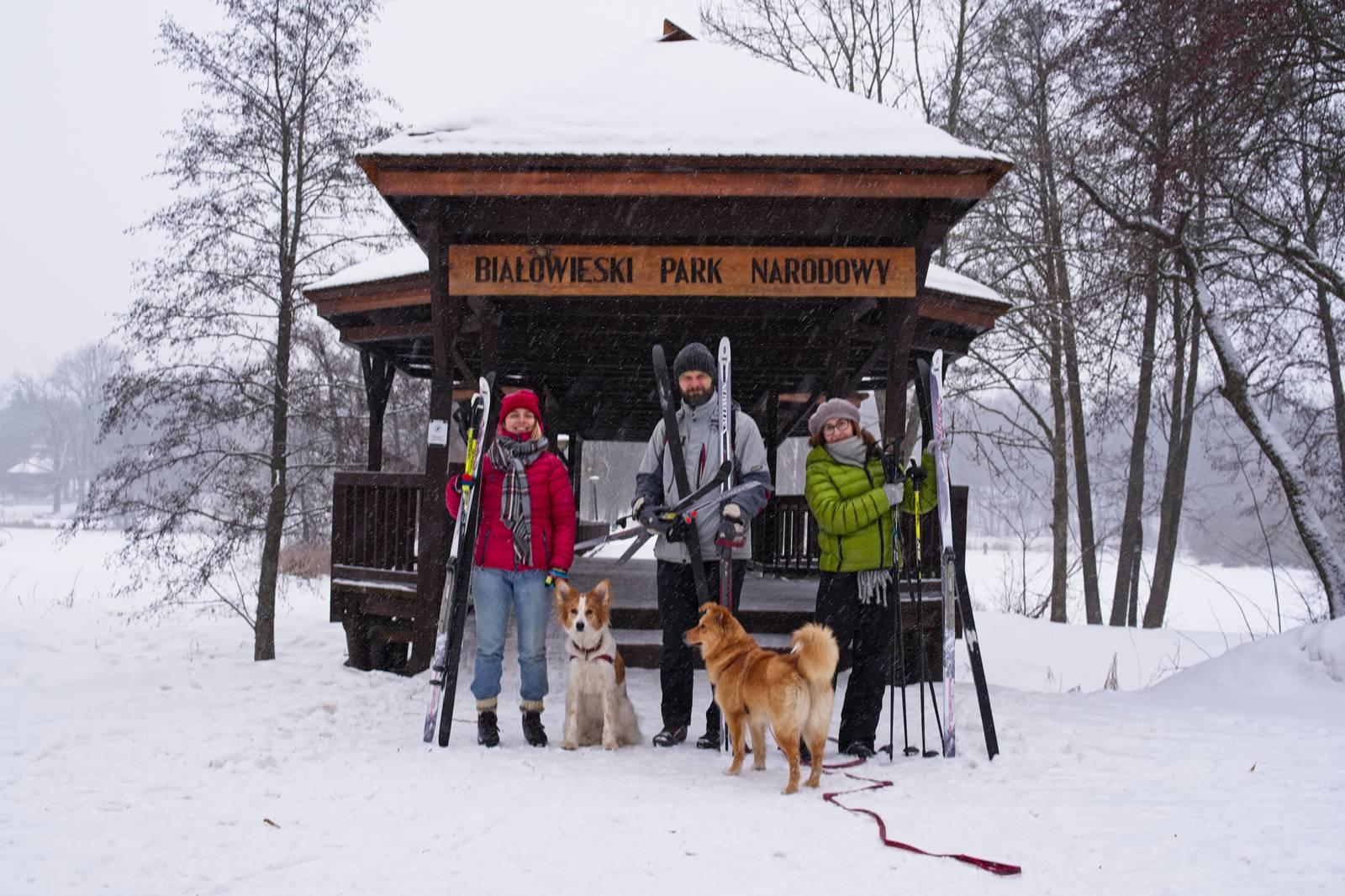 bialowieza forest in winter skiing cross country