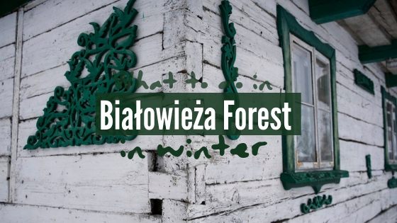 Bialowieza forest in winter what to do in bialowieza in winter time