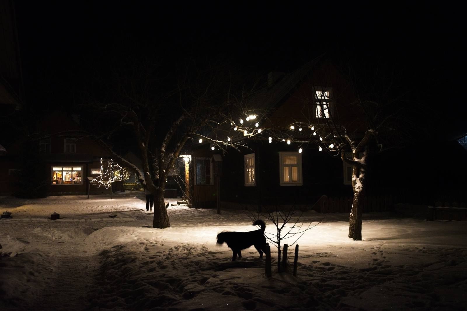 bialowieza in winter christmas time eastern poland night in the village