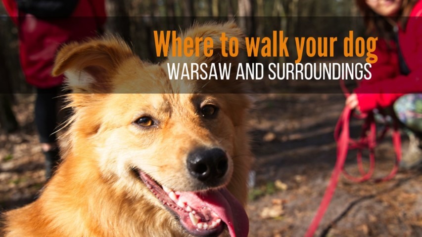 where to walk your dog in warsaw parks and forests near warsaw