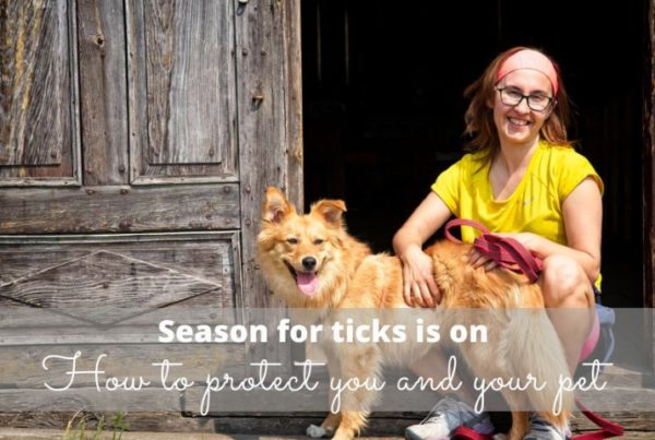 ticks in poland how to remove tick dog protection