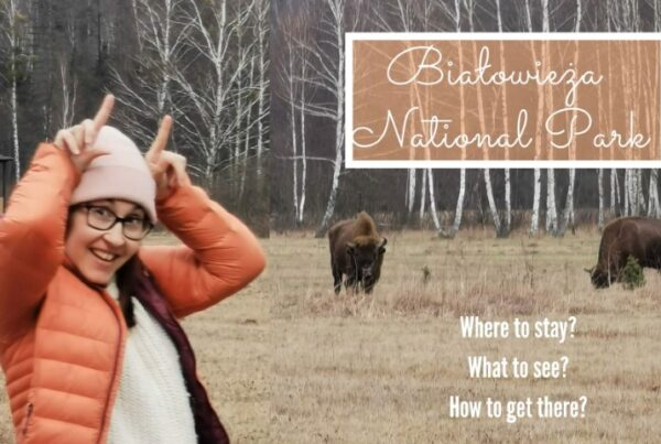 bialowieza national park attractions accommodation
