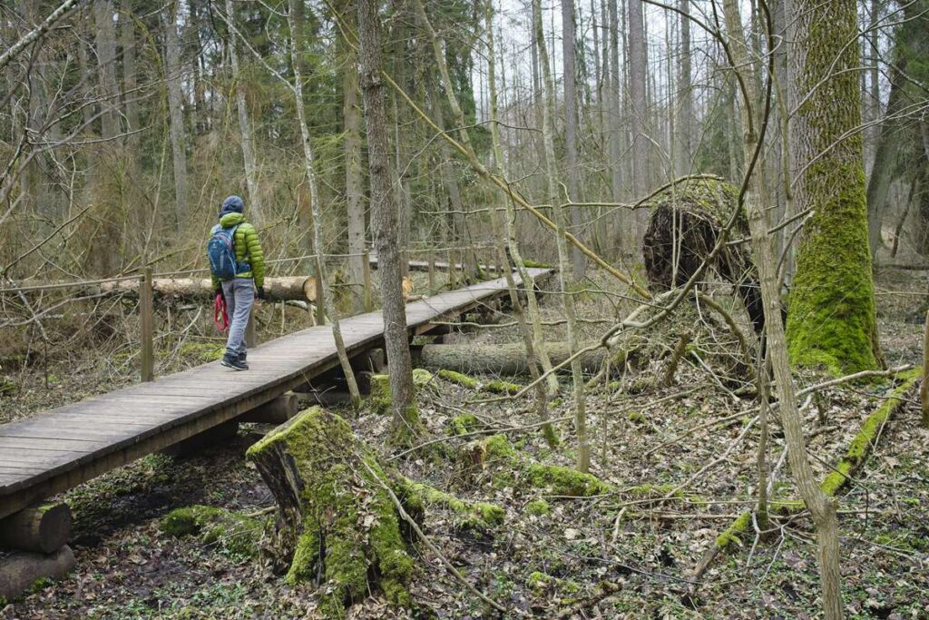 tourist trails hiking in bialowieza